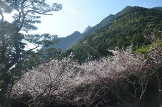 0226sakura_0934.jpg