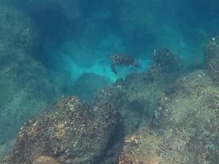 0726ウミガメ.jpg