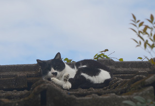 1127屋根の上の猫.jpg