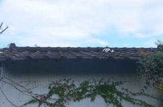 1127屋根の上の猫02.jpg
