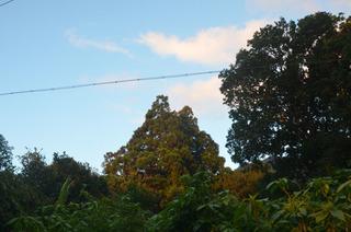 1128トトロ朝日遠くから.jpg