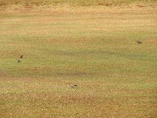 0110公園鳥たち1614.jpg