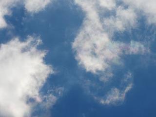 0118ボタンボウフウ彩雲5772.jpg