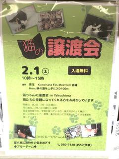0131猫の譲渡会_1669.jpg