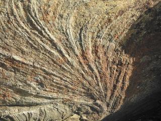 01ズーフィコス化石群1735.jpg