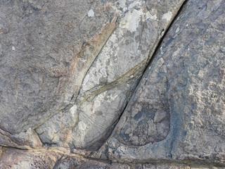 01ズーフィコス化石群1736.jpg