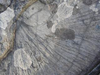 01ズーフィコス化石群1739.jpg
