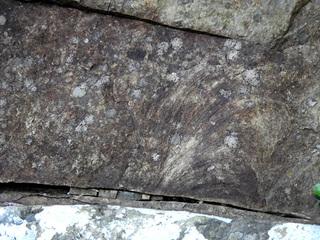 01ズーフィコス化石群1743.jpg