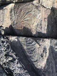 01ズーフィコス化石群_4582.jpg