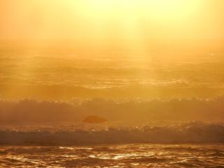 0213金色の波2378R.jpg