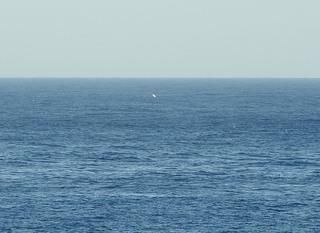 0217クジラの手7531.jpg