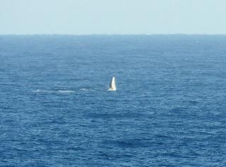 0217クジラダンス7519.jpg