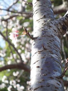 0224桜6571.jpg