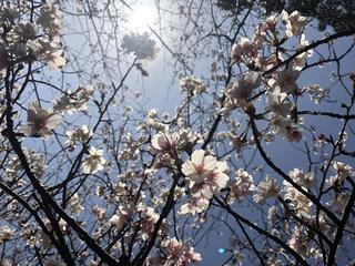 0224桜_5326.jpg
