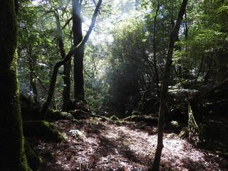 0226森の光3860.jpg