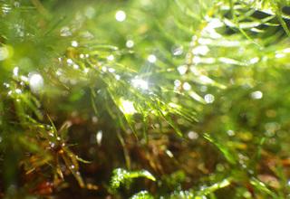 0226美しい苔の光7113.jpg