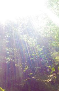 0226虹色の森7102.jpg