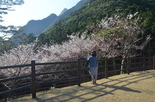 0226MIKI桜_0933.jpg
