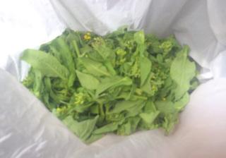 0306菜の花7162.jpg
