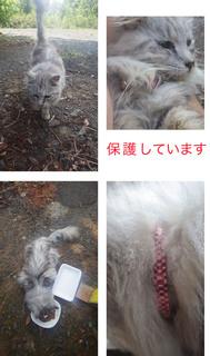 0331保護猫.jpg