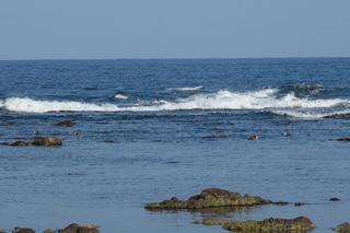 0406海カモ057.jpg