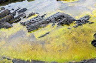 0523海の藻02.jpg