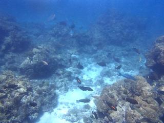 0604海の中.jpg