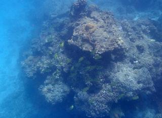 0604海の中カゴカキダイ.jpg