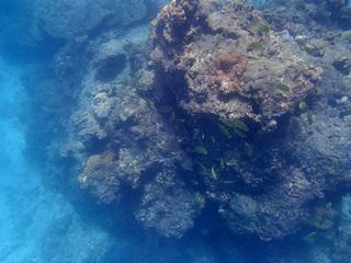 0604海の中カゴカキダイ03.jpg
