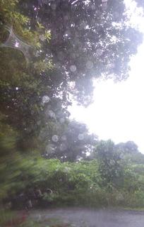 0621雨02.jpg