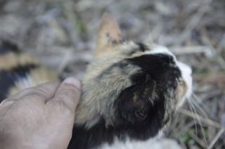 0623パイン猫2304.jpg