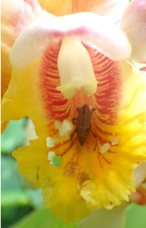 0702月桃と虫.jpg