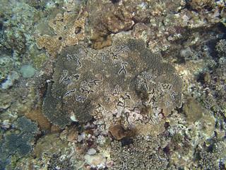 0715珊瑚.jpg