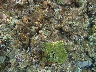 0715珊瑚02.jpg