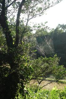 07蜘蛛の巣の木03305.jpg