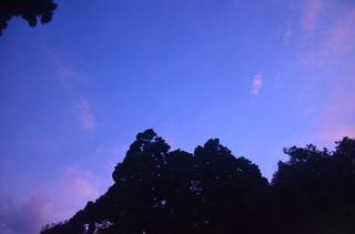 0815夕焼けトトロ_2515.jpg