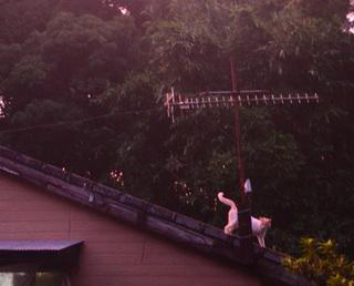 0815屋根の上のフュージョン_250_027.jpg