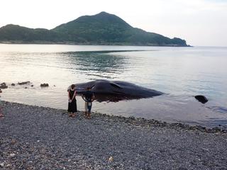 0823マッコウクジラ9827.jpg