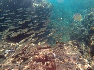 0823魚の大群yotuse_150853_024.jpg