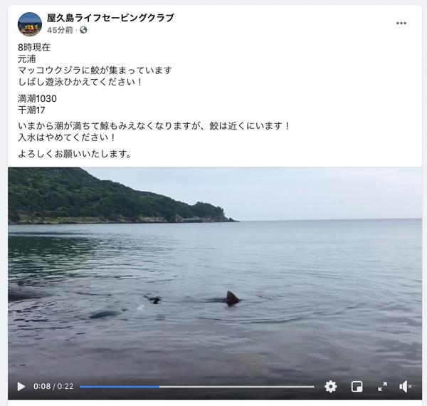 0824クジラと鮫.jpg