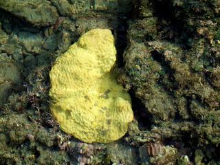 0829蛍光珊瑚9930.jpg