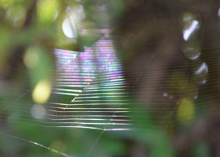 0908蜘蛛の巣.jpg
