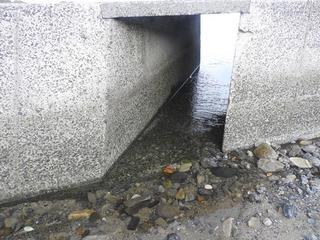 0925ウナギの川02.jpg