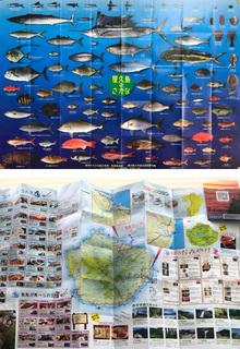 0926屋久島の魚.jpg