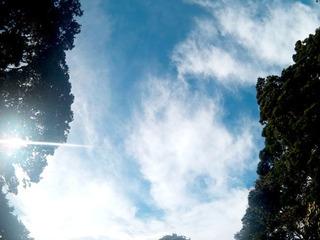 0930台風の目木漏れ日_085505_007.jpg