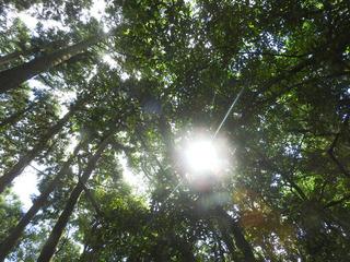1001麦生の森.jpg