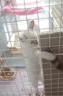 1015わた子猫と尻尾02.jpg