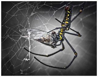 10大女郎蜘蛛blog.jpg