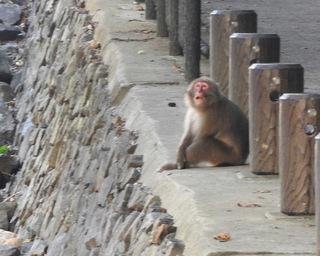 1102大川の滝ヤクザル4990.jpg