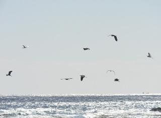 1120サギ飛翔1196.jpg